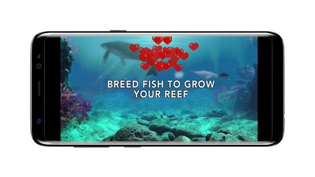 Ocean Reef Life